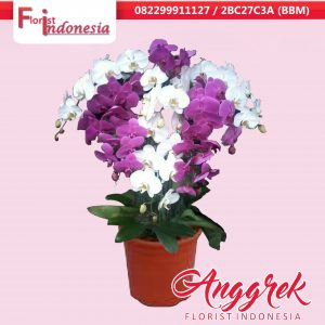 Toko Bunga Anggrek di Pondok Indah