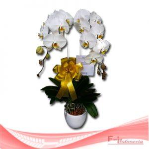 bunga anggrek FHRI-001