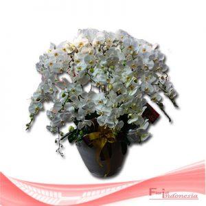 bunga anggrek FHRI-002