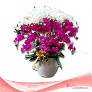 bunga anggrek FHRI-003