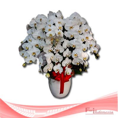 bunga anggrek FHRI-004