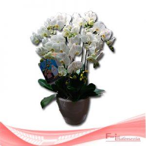 bunga anggrek FHRI-005